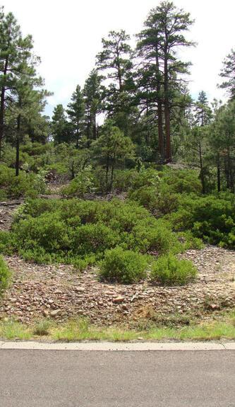 1720 S. Pleasant View Dr., Show Low, AZ 85901 Photo 3
