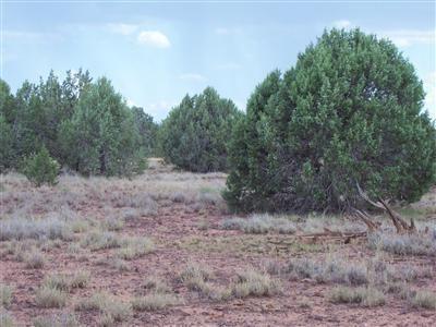 1805 W. Cumberland Parcel J Rd., Ash Fork, AZ 86320 Photo 16