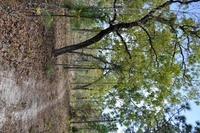 Home for sale: Ruffed Grouse Rd., Weeki Wachee, FL 34614