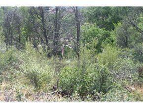 2030 Monte Rd., Prescott, AZ 86301 Photo 6