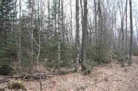 Home for sale: County Rd. A, Pickerel, WI 54465