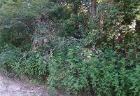 Home for sale: 13572 White Oak Dr., Plantersville, TX 77363
