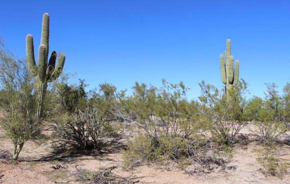27026 N. 152nd St., Scottsdale, AZ 85262 Photo 32