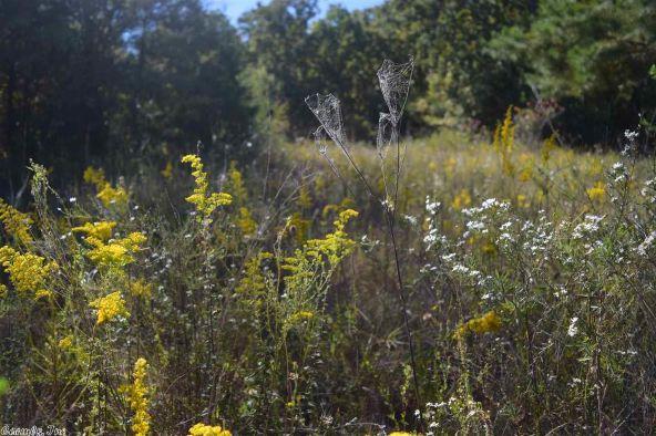 32 Meadow Crest, Sherwood, AR 72120 Photo 56