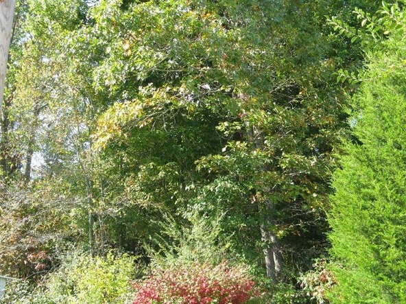 1111 Holly Grove Rd., Keavy, KY 40741 Photo 2