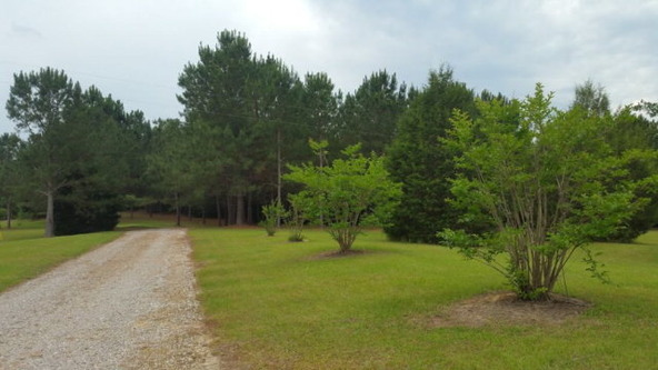 653 County Rd. 339, Skipperville, AL 36374 Photo 3