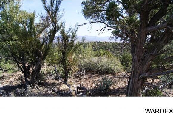 6731 N. Trap Springs Rd., Hackberry, AZ 86411 Photo 28