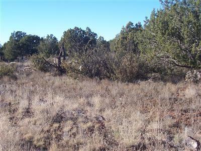 1357 W. Pinto Dr., Ash Fork, AZ 86320 Photo 2