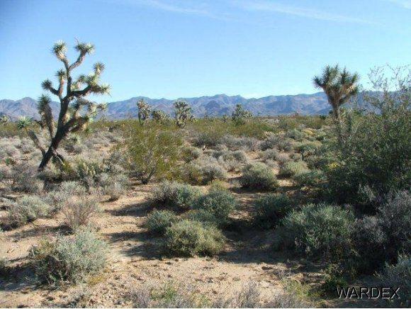 3529-D Arroyo Rd., Yucca, AZ 86438 Photo 10