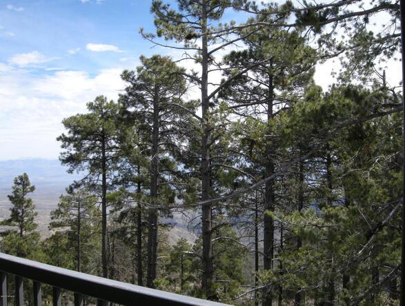 13067 N. Upper Loma Linda N, Mount Lemmon, AZ 85619 Photo 6