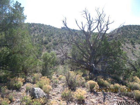 00 N. Willows Ranch Rd., Kingman, AZ 86401 Photo 10