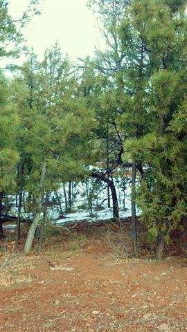 3500 W. Falling Leaf Rd., Show Low, AZ 85901 Photo 3