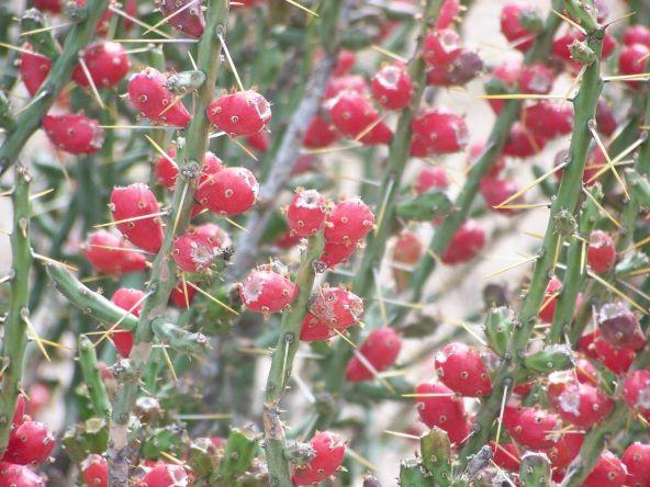 1326 N. Tanque Verde Loop, Tucson, AZ 85749 Photo 31