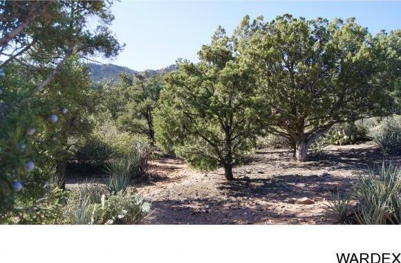9999 N. Trap Springs Rd., Hackberry, AZ 86411 Photo 37