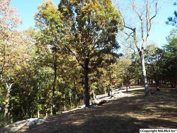 11 S. County Rd. 89, Mentone, AL 35984 Photo 13
