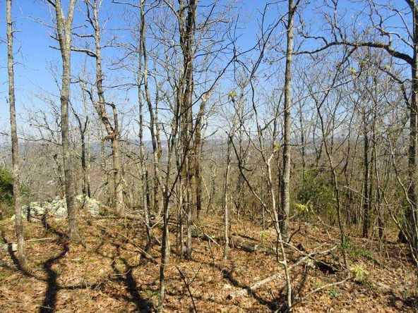 1.4 Ac Mt Riante Rd., Hot Springs, AR 71913 Photo 4