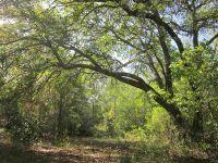 Home for sale: Lot 28m Aucilla River Estate Rd., Lamont, FL 32336
