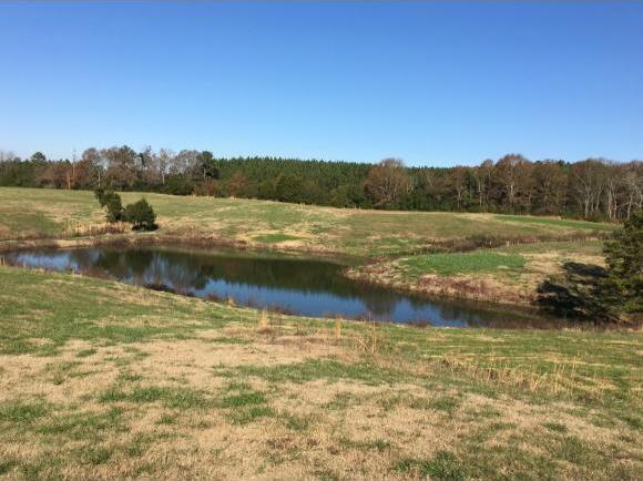 550 Co Rd. 1749, Holly Pond, AL 35083 Photo 25