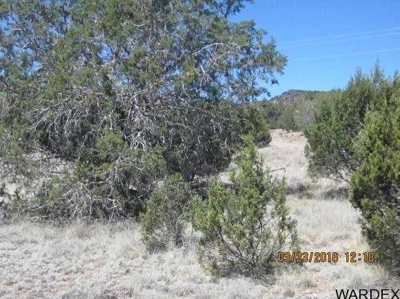 33307 W. El Caballo Rd., Seligman, AZ 86337 Photo 15