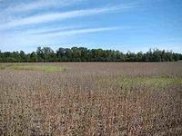 Home for sale: 4097 Oak Dr., Pinson, TN 38366