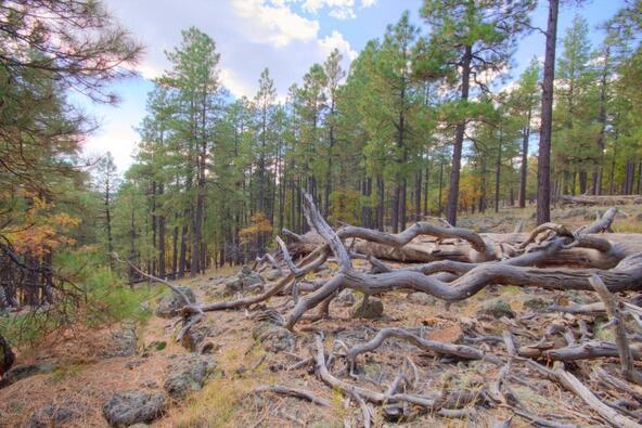 8100 W. Dk Ranch Rd., Flagstaff, AZ 86005 Photo 20