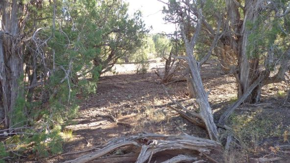 44201 N. Crazy Coyote Way, Seligman, AZ 86337 Photo 35