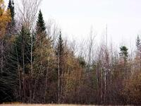 Home for sale: Lot 1 Moro Town Line Rd., Smyrna Mills, ME 04780