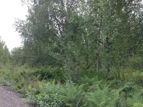 9738 E. Susitna Rd., Trapper Creek, AK 99683 Photo 3