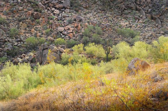 15255 E. Sage Dr., Fountain Hills, AZ 85268 Photo 8
