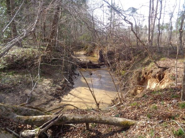 275+/-Ac Cty Rd. 46/Cty Rd 97, Abbeville, AL 36310 Photo 35