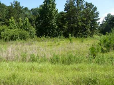 Cedar Ln. Lot#33, Summit, MS 39666 Photo 8