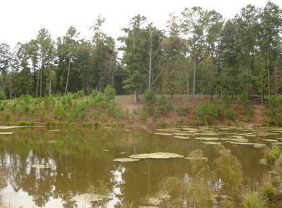 1281 Co Rd. 112, Woodland, AL 36278 Photo 20