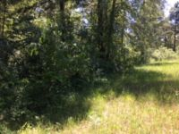 Home for sale: 1118 Tanyard Creek, Thomson, GA 30824
