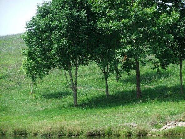68 Serenity Ct., Cynthiana, KY 41031 Photo 43