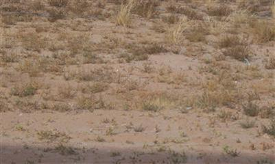 Hwy. 304, Belen, NM 87002 Photo 8