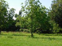 Home for sale: 110 E. Hinkley, Brookland, AR 72417