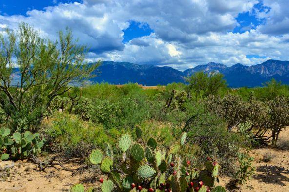 14601 N. Quiet Rain Dr., Oro Valley, AZ 85755 Photo 5