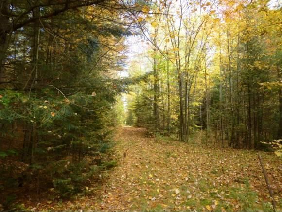 Lot #6 Woodland Dr., North Troy, VT 05859 Photo 1