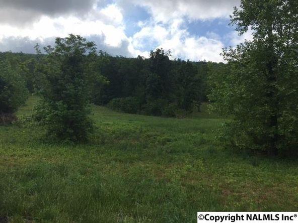 3 County Rd. 67, Langston, AL 35755 Photo 11