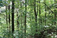 Home for sale: Hillcrest Dr., Parrottsville, TN 37843