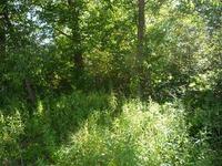 Home for sale: Cemetery Rd., Weyauwega, WI 54983