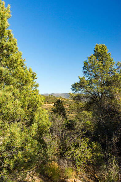 17955 W. Buckhorn Dr., Peeples Valley, AZ 86332 Photo 33