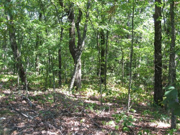 16.38 Acres Layer Ln., Harrisburg, AR 72432 Photo 8