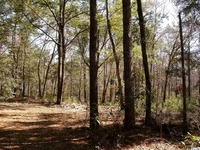Home for sale: Lot 7 Shadow Moss Ln., Murrells Inlet, SC 29576