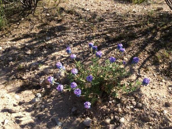 6450 N. Canyon Rd., Rimrock, AZ 86335 Photo 5