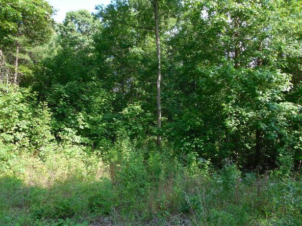 20+/- Acres Hwy. 431, Roanoke, AL 36274 Photo 3