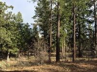 Home for sale: 0 W. Rim Rd., Lakeside, AZ 85929
