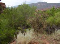 Home for sale: Hwy. 96, Arroyo de Agua, Coyote, NM 87014