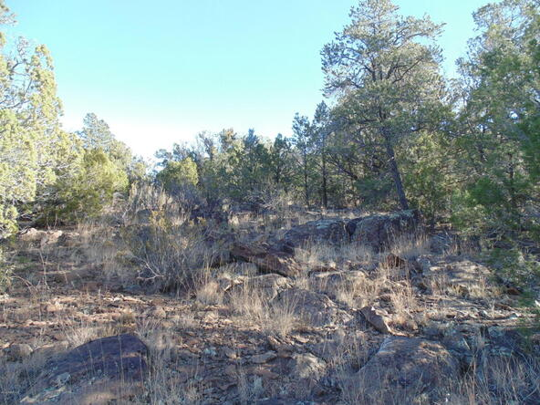 496 High Sierra, Seligman, AZ 86337 Photo 6