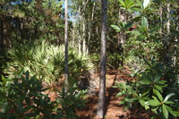 Home for sale: Greengrove Bv, Lot 12, Clermont, FL 34711